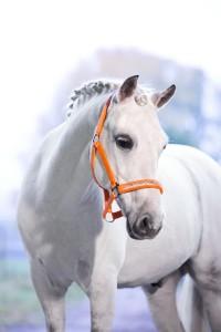 grimma-ponny